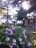 Holiday apartment 1159134 for 7 persons in Codrignano