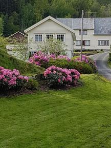 Gemütliches Ferienhaus : Region Fjordnorwegen für 4 Personen