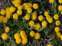 Mieszkanie wakacyjne 1406323 dla 4 osoby w Ravensburg