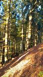 Ferielejlighed 1441207 til 3 personer i Schmallenberg-Rehsiepen