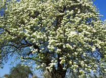 Ferienwohnung 1543725 für 2 Personen in Walddorfhäslach
