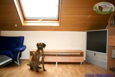 Appartement de vacances 1553702 pour 4 personnes , Diebach