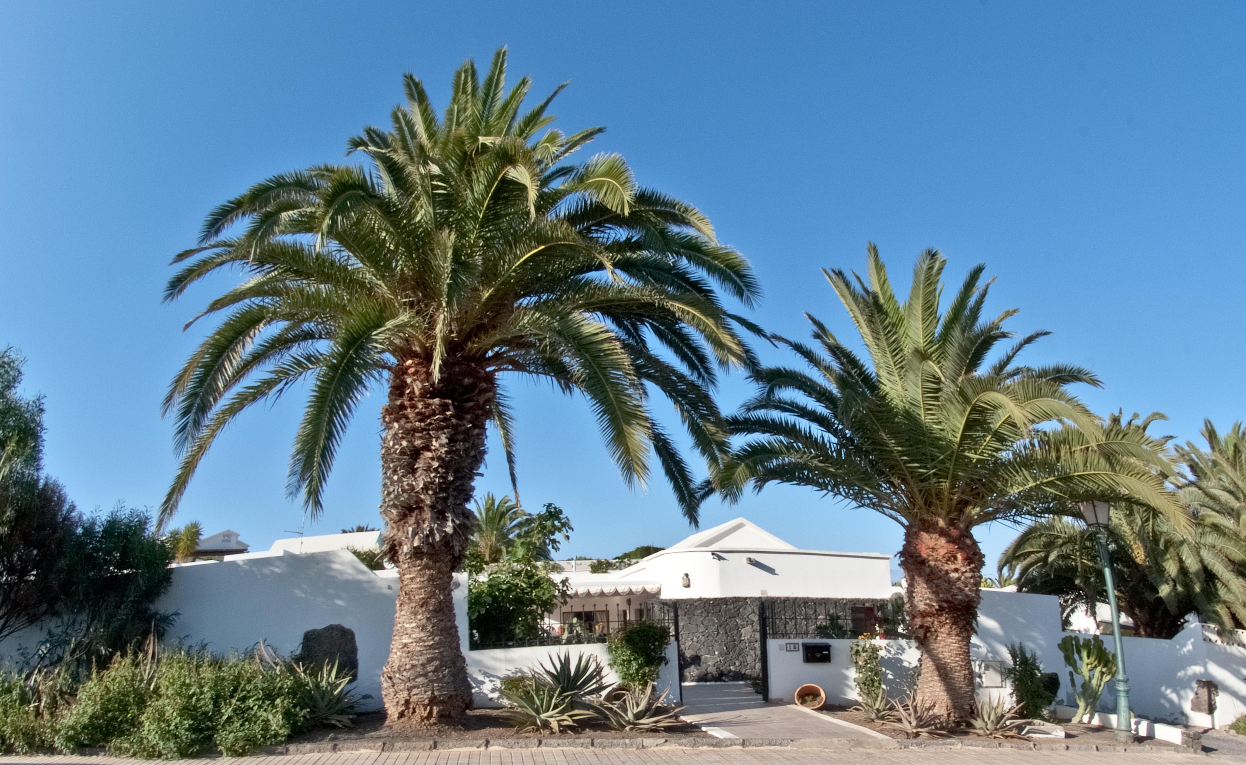 Ferienhaus mit Privatpool für 8 Personen  + 1   Lanzarote