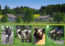Rekreační byt 1698073 pro 6 osob v Eschenz