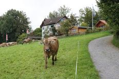 Ferienwohnung 1698080 für 3 Personen in Neukirch (Egnach)