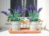 Rekreační dům 1752731 pro 5 osob v Ostseebad Kühlungsborn