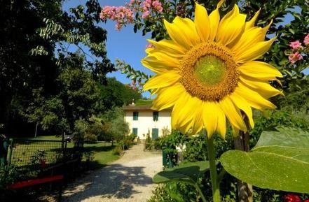 Für 5 Personen: Hübsches Apartment / Ferienwohnung in der Region Toskana