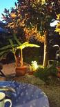 Holiday apartment 841153 for 6 persons in Herceg Novi
